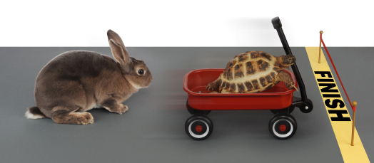 Are You Sleep Training a Tortoise or a Hare?