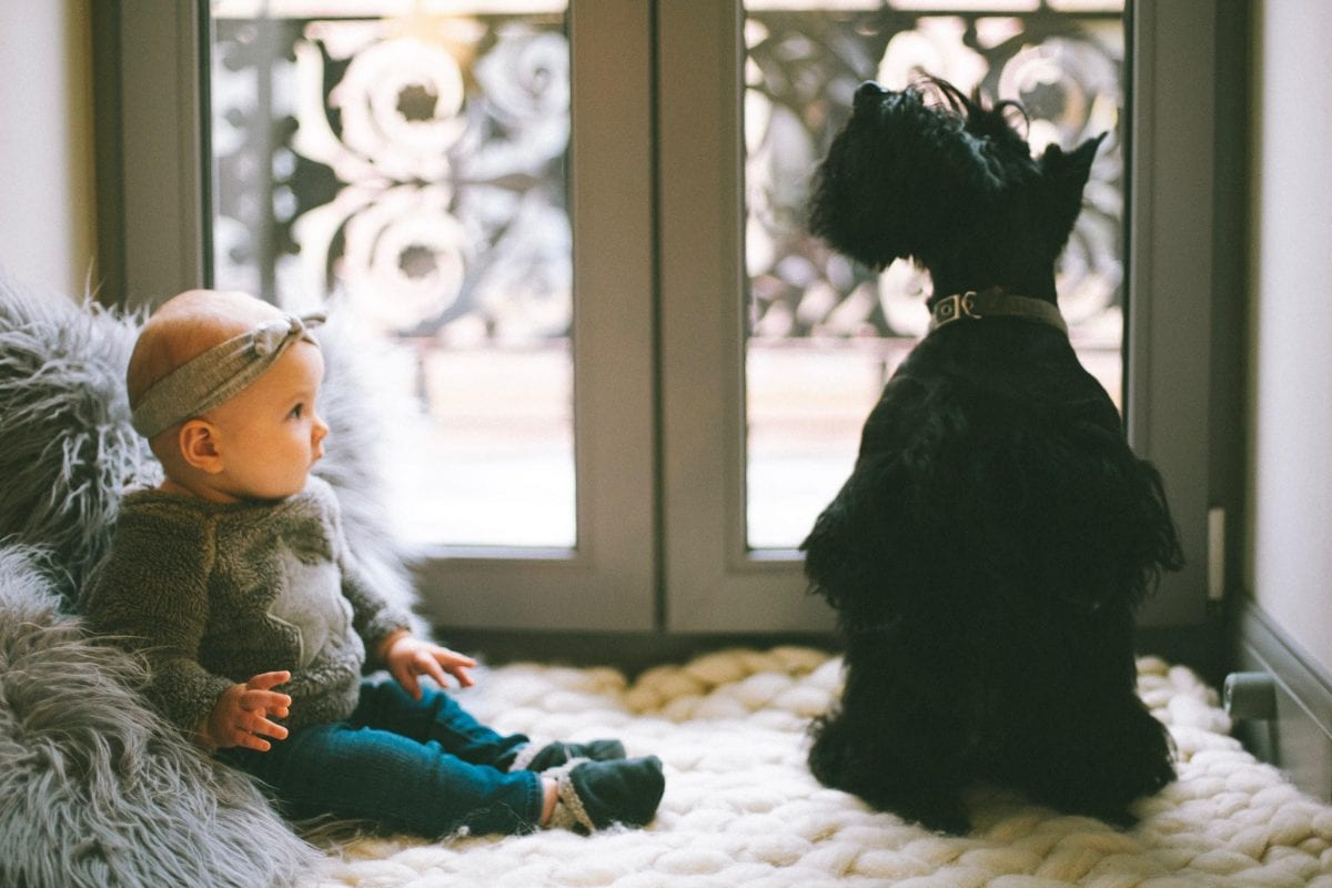 Top 5 Best Dog Breeds for Families with Babies